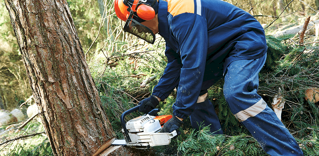 How to Use a Chainsaw Safely: Follow These Tips!