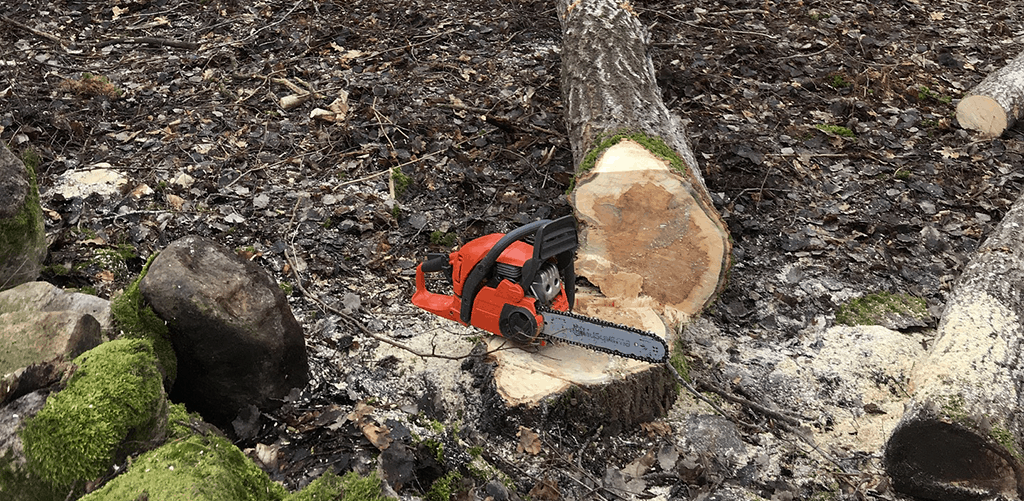 How to Use a Chainsaw to Fell a Tree: Step by Step